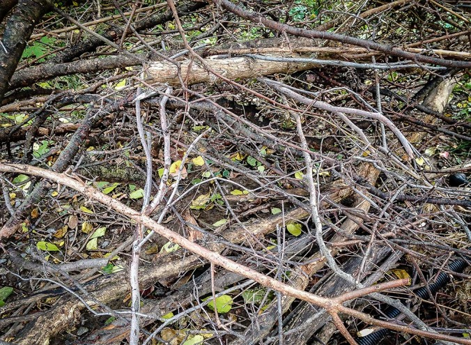 Brush and Branches Behind the Nursing Home (Photo by Francis DiClemente)