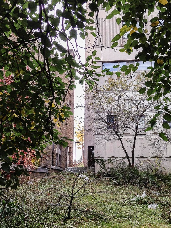 Behind the Nursing Home, Looking East (Photo by Francis DiClemente)